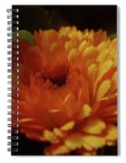 A Shadowed Blossom  Spiral Notebook