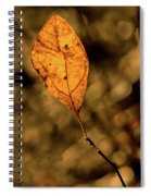 A Single Leaf In The Late Sun Spiral Notebook