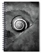 A Snail On A Leaf Spiral Notebook