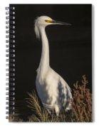 A Snowy Egret Portrait Spiral Notebook