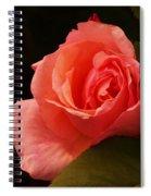 A Soft Rose  Spiral Notebook