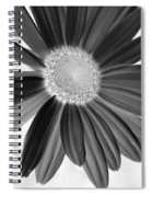A Solo Daisy In Negative Spiral Notebook