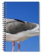 A Splendid Seagull Spiral Notebook