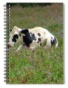 A Spot Of Rest Spiral Notebook
