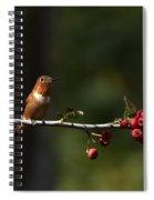 A Spot Of Sunlight Spiral Notebook