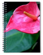 A Stand Alone Stand Out Spiral Notebook