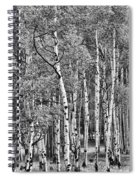 A Stand Of Aspen Trees In Black And White Spiral Notebook