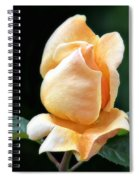 A Star Is Born Spiral Notebook