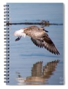 A Startled Sanderling By Darrell Hutto Spiral Notebook
