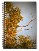 A Sumac Tree And A Bare Branch Spiral Notebook