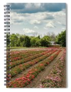 A Summer Dream Of Roses Spiral Notebook