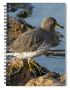 A Surfbird At The Tidepools Spiral Notebook
