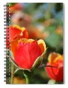 A Surprise Inside Spiral Notebook