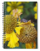 A Tiny Peek Spiral Notebook
