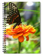 A Touch Of Summer's End Spiral Notebook