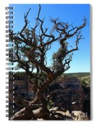 A Tree On The Edge Spiral Notebook