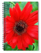 A True Red Spiral Notebook