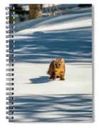 A Walk In The Woods Spiral Notebook