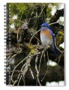 A Western Bluebird In A Tree Spiral Notebook