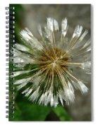 A Wet Dandelion  Spiral Notebook