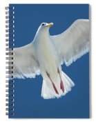 A White Gull Flying In Sky Spiral Notebook