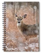 A White-tailed Deer In The Snow Spiral Notebook