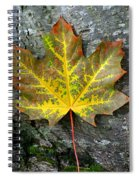 A Work Of Nature's Art Spiral Notebook
