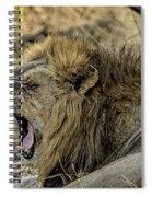 A Yawning Lion Spiral Notebook