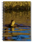 A Young Duckling Spiral Notebook