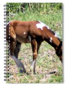 A Young Painted Colt  Spiral Notebook