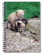 Abandoned Kittens On The Street Spiral Notebook