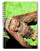 Abbotts Sphinx Moth Spiral Notebook
