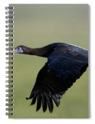 Abdims Stork Flying, Ndutu, Ngorongoro Spiral Notebook