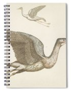 Above A Flying Crane And Beneath A Flying Pelican, Anonymous, 1688 - 1698 Spiral Notebook