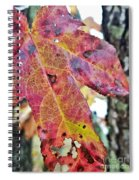 Abstract Autumn Leaf 2 Spiral Notebook