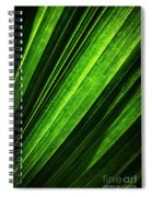 Abstract Of Green Leaf Of Exotic Palm Tree Spiral Notebook
