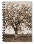 Acacia Tree In Sepia Spiral Notebook