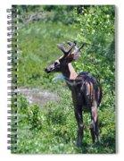 Acadia Buck 2 Spiral Notebook
