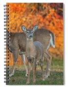 Acadia Deer Spiral Notebook