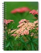 Achillae's Heel Spiral Notebook