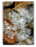 Acorn Cap Filled With Snow Spiral Notebook