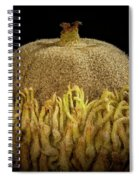 Acorn Emerging Spiral Notebook