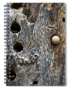 Acorn Woodpecker Cache, Sequoia National Park, Ca  September 2016 Spiral Notebook
