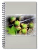 Acorns Spiral Notebook