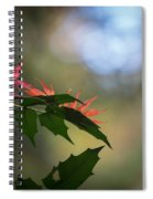 Adding Color To The Holly Spiral Notebook