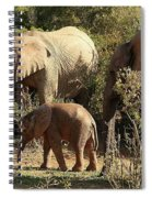Addo Elephant Family Spiral Notebook