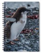 Adelie Penguin Chick Running Along Stony Beach Spiral Notebook