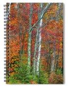 Adirondack Birches In Autumn Spiral Notebook
