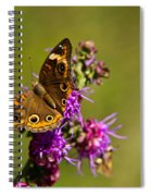 Admiral Butterfly  Spiral Notebook