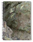 Adobetown Bunny Spiral Notebook